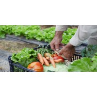 Agroalimentari-Elaborats